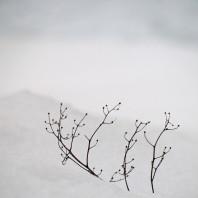 Practicing Silence: Entering a World of Quietude